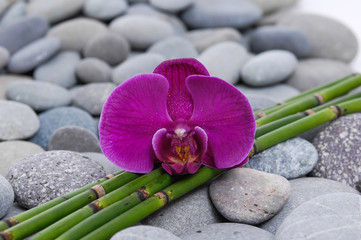 Red orchid and bamboo grove on stones