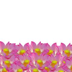 Wall Mural - lotus pattern