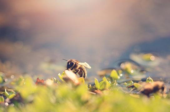 Closeup photo of honey bee a sunny day