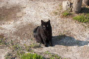 Black female cat sitting outdoors and looking at camera