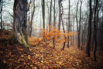 Herbstzeit im Wald