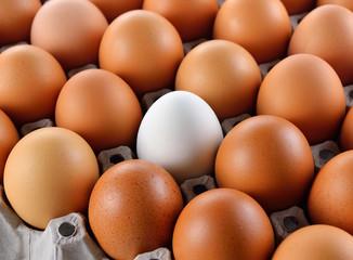 Closeup of white egg in carton