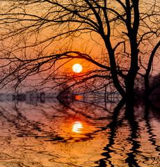 sunset sun and tree