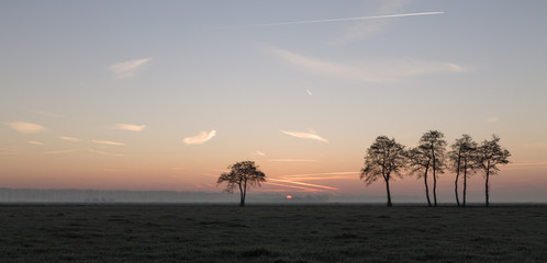 Zonsopkomst met bomen, panorama.