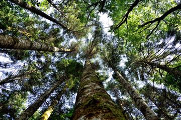 Prospettiva dal bosco