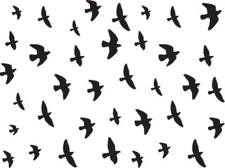 Flying birds isolated on white background
