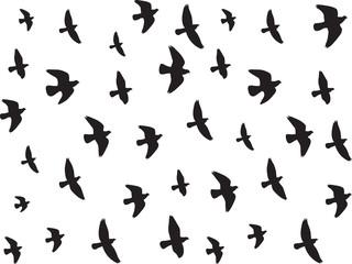 Flying birds isolated on white background