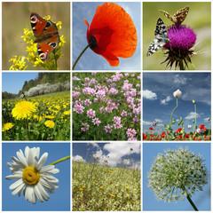 floral springtime collage