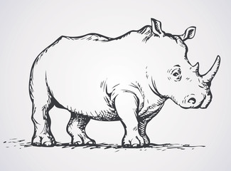 Rhinoceros. Vector drawing