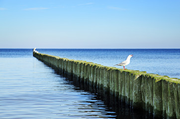 Wall Mural - Küstenschutz