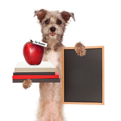 Fototapete - Dog Carrying School Books and Apple