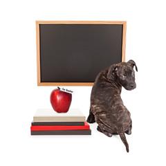 Fototapete - Puppy at School Blank Chalkboard