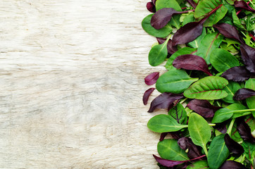 mix salad Romaine, arugula, spinach, mizuna, chard, oak salad