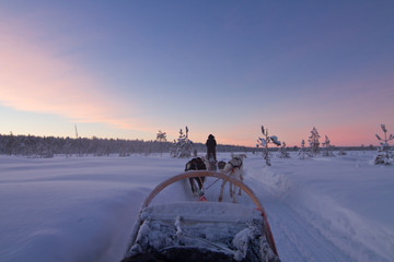 Husky dog sledding ride at sunset in Lapland