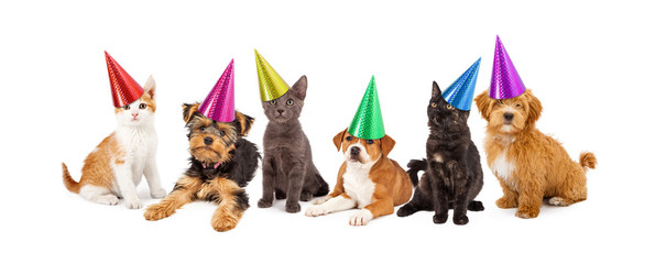 Wall Mural - Puppies and Kittens in Party Hats