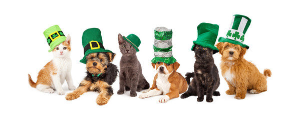 Wall Mural - St Patricks Day Puppies and Kittens