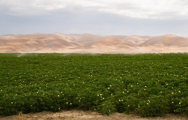 Lush Farm Field Plant Irrigation California Agriculture