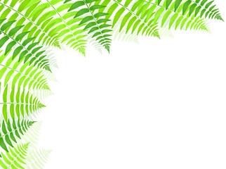シダ 葉 植物