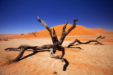 Photo sur Aluminium Bestsellers dry tree Sossusvlei, Namibia