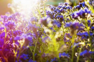 Blur spring background