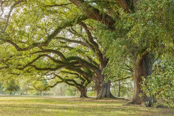 Park Tree 13