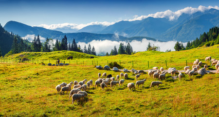 Wall Mural - Panorama of the alpine pastures in the Slovenian