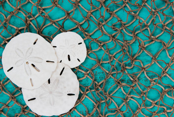 Sand dollars on fish net and teal blue wood background