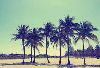 Vintage toned photo of coconut palms