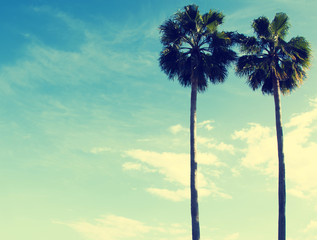 Vintage toned photo of two palms