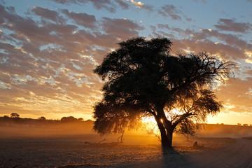 African sunset with silhouetted tree, Kalahari desert