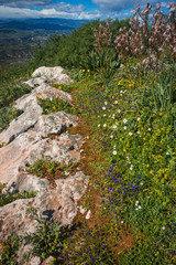 Spring flowers at Akrokorinf, Peloponnese, Greece