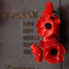 Red poppy to honour veterans in the World War