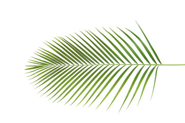 Palm, leaf form and texture