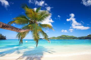 Palmen, Meer und Sand