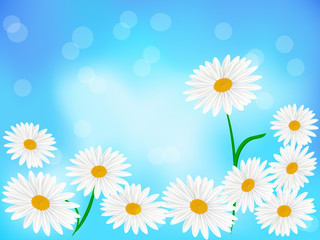 Daisy wheels on blue background