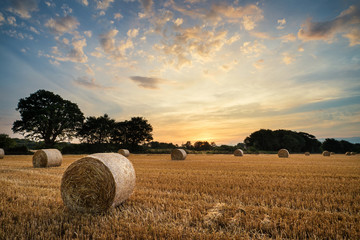 Spoed Fotobehang Beige Rural landscape image of Summer sunset over field of hay bales