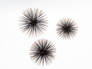 amazing great view of decorated sea urchins isolated on white