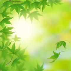 Fresh green leaves in spring, vector illustration