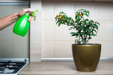 Woman spraying flowers in the kitchen