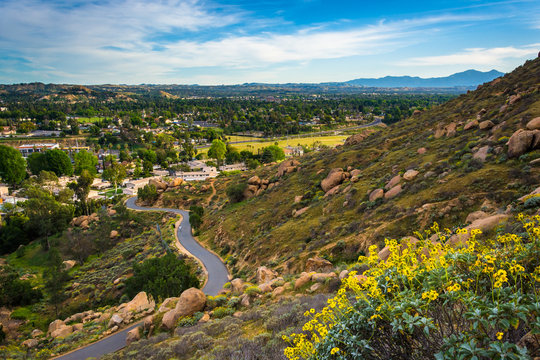 Yellow flowers and view of trail at Mount Rubidoux Park, Riversi