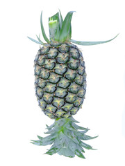 pineapple isolated on white