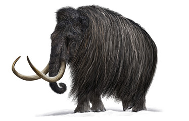 Mammoth Wall mural