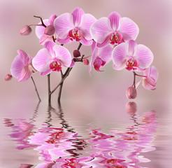 Obraz Różowa orchidea z odbiciem w wodzie - fototapety do salonu