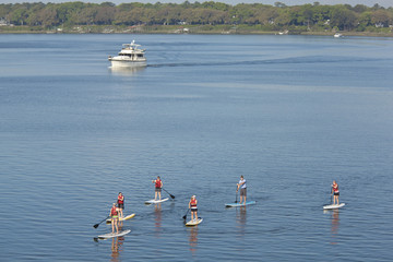 group of people paddleboarding