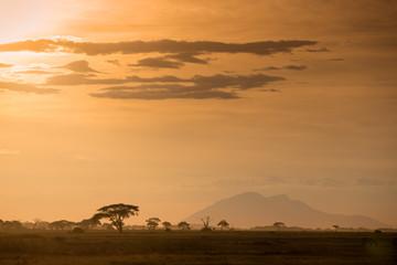 African gold landscape