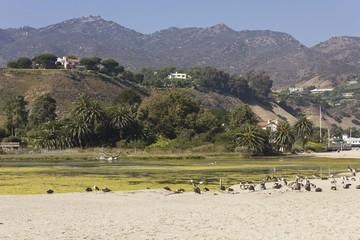 Malibu hills landscape in the summer