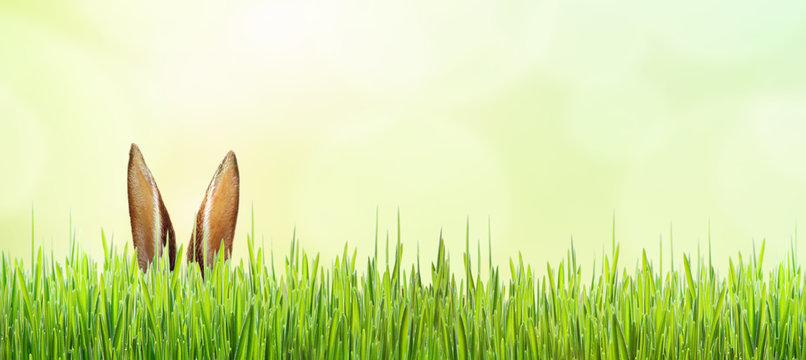 Osterhase versteckt im Gras