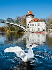 White Swan in Treptow Park, Berlin