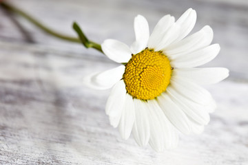 Common chamomile flowers on wooden table