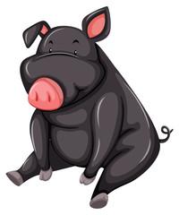 Fat gray pig
